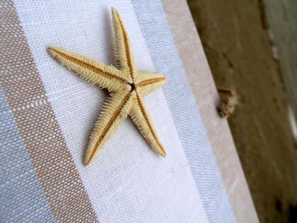 zvaigzde1